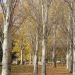 callendo las hojas